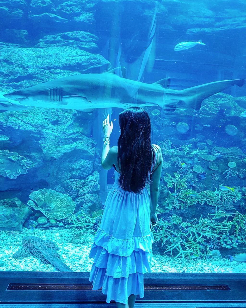 Dubai Mall Aquarium Hai