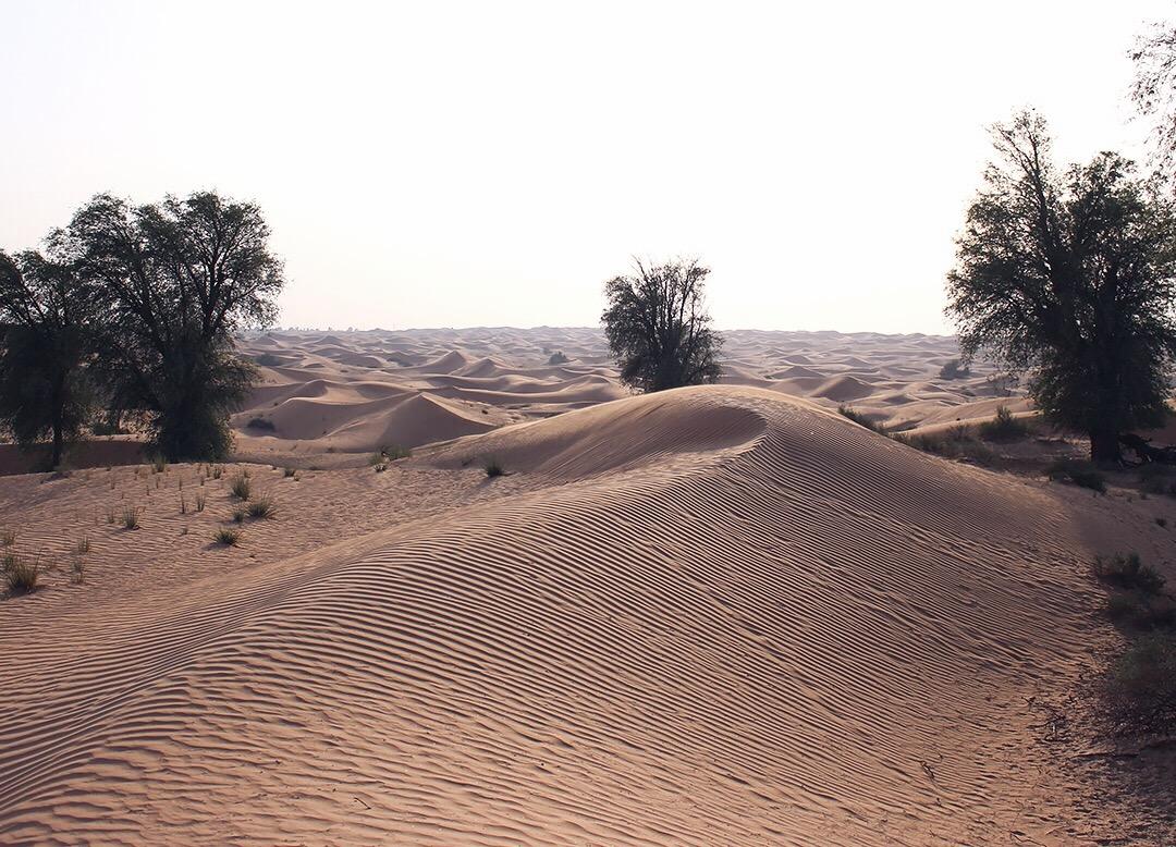 Sanddünen Dubai Desert