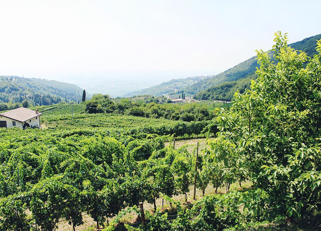 Valpolicella Wine Tasting in Italy Weingut