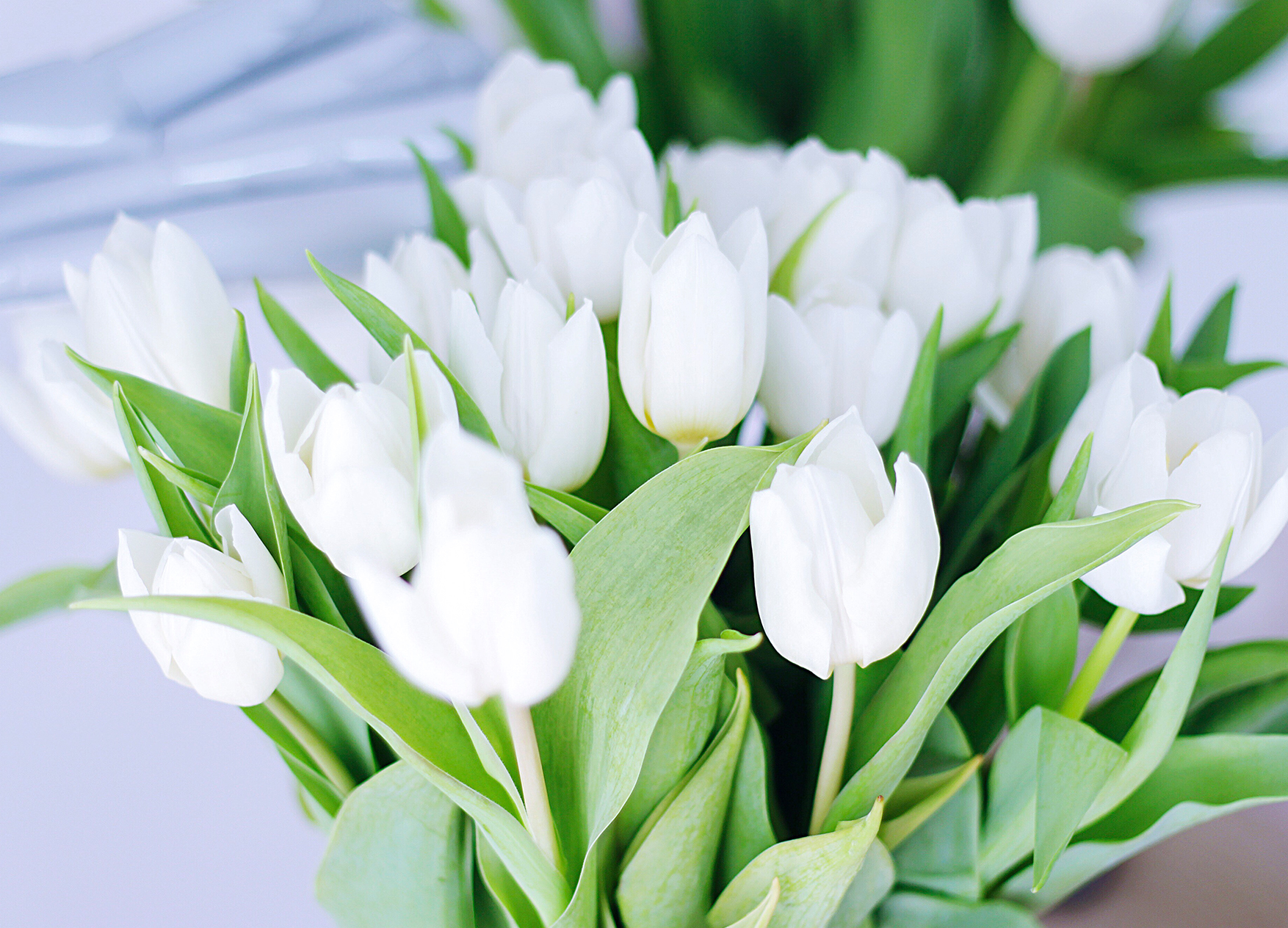 Trauzeugin weiße Tulpen
